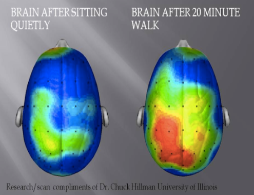 brain after walking